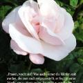 Zartorsa Rose Zitat von Olympe de Gouges. Frauen, wacht auf! Was auch immer die Hürden sein werden, die man euch entgegenstellt, es liegt in eurer Macht, sie zu überwinden. Ihr müßt es nur wollen.