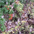 Mariahilfer Ruhe- und Therapiepark - Herbststrauch mit roten Beeren