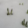 Mariahilfer Ruhe- und Therapiepark - Knospen im Schnee