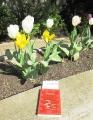 Buch im Park - April 2011