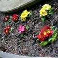 Mariahilfer Ruhe- und Therapiepark - Erster Frühlingsgruß