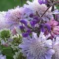 Ein Strauss mit lila Blumen