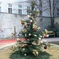 Weihnachtsbaum im Park