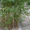 Vandalismus im Park - Bambus abgebrochen
